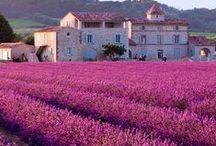 TRAVEL ▲ Provence / http://www.happyusbook.com