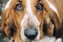 Nothing Better than a Basset Hound / by Michelle Doerr