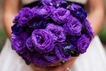 African Violet/Purple Weddings