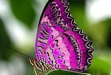 Butterflies, Dragonflies, and Ladybugs / all things about butterflies, dragonflies, and ladybugs / by Sweetlysinging