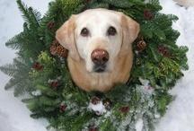 Christmas and Elf on a Shelf ideas / by Alyssa Robbins