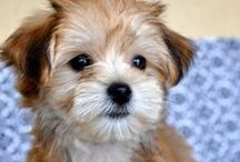 {  Puppies & Little Furries  }