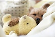 Sooo Cute!!!