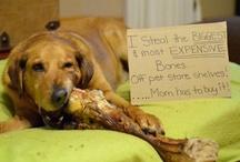 Dog Shaming... LOL !