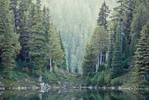 Art Ref - forest