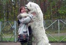 Big Dogs !!