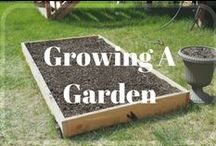 Growing A Garden / Growing Ideas for planting and growing your first garden. Garden, Gardening, Planting,
