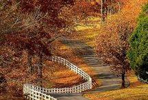 Fall Colors Beauty