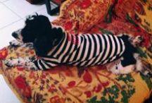 ♥ Piper  ♥  My Beloved Furry Girl