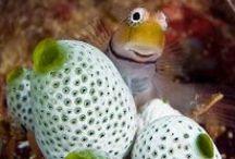 Shells & Corals & Reefs