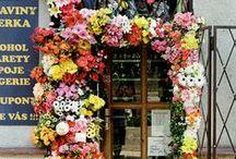 floral / by Lindsay King