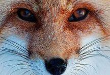 Cute animals / by Elizabeth Mackey