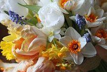 Flowers / by Elizabeth Mackey