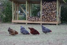 old MacDonald.... / Ideas for Birch Wood farm!