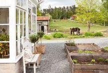 Gardening/outdoor/Chickens