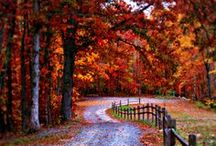 Autumn / by Jonelle Nielsen