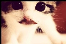 Meow / by Kristen B