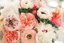 Wedding- Flowers / by You Smell