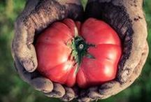 Garden - Vegetables & Fruit