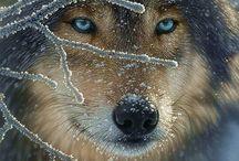 Animal Kingdom / by Terri Mulligan