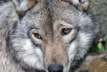 Wolves & Other Fab Creatures / by Liz Farrell