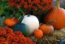 Fall/Halloween / by Rachel Connell