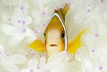 Small underwater life