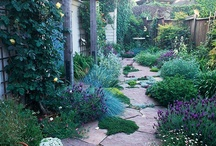 Gardening / by Alison Conliffe