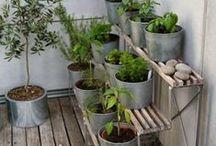 Gardening and Outdoors / Gardening and Outdoors