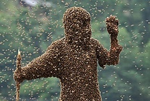 bee keeping. / by jacqueline telf