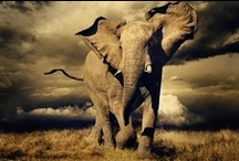 Get Your Trunk On! / I love elephants!