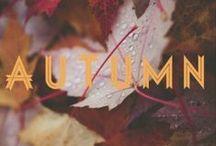 fall / The pumpkin spiciest season of the year.