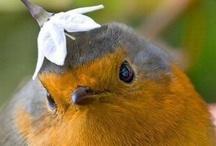 Birds / by Crysta Kern