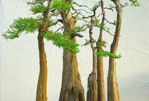 Branching Out / by Kathleen Crouse-Bradley