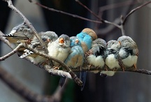 the littlest birds sing the prettiest song / by Stacy Severson