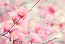 ~ pretty ~