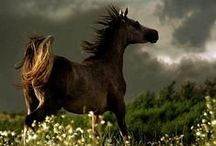 HORSES / .  Horses are truly magnificent and beautiful animals.   / by Pam Stovall