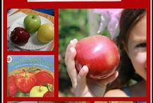 Apples Theme / Preschool, kindergarten, early elementary theme / unit curriculum, crafts, songs, finger plays, printables, games, math, science, ideas.