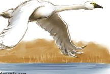 Birds / Bird drawings and bird paintings birdart birding