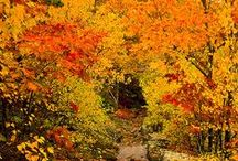 Glorious Autumn / DIY, beautiful pictures and the all around loveliness that is my favorite season! / by Angel ~ Fleece Fun