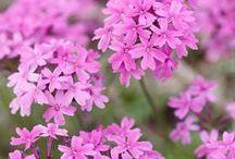 piante che restano vive / fuss free plants