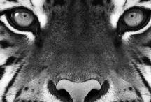 Spirit Animals / by Kendyl Rae