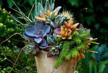 Succulents / by Sue Mings