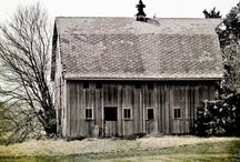 Barns, Owls & Tree of Life / My latest obsessions. / by Angie Bailey