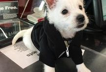 AA Pets / They're our best friends after all; we will continue to advocate fashion, comfort and warmth on their behalf. Meanwhile, here are some of our four legged friends in their favorite #AmericanApparel attire.