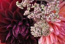 FARBE ♥ burgundy & bordeaux...