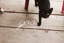 CAT, what else?