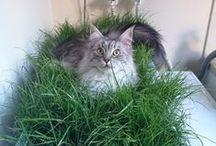 Pets / Cute pet and animal photos and practical pet advice!