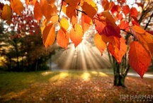 Laughing in the Leaves / A Tribute to My Favorite Season --> Fall / by Danielle Mach