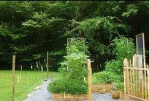 Saucy's Wee Kitchen Garden